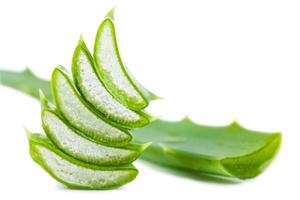 Aloe Vera gegen Magenprobleme